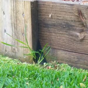 EzySNIP installed behind a tuft of grass.