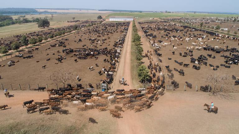 Gado confinado para exportação na fazenda Tabaju em Sales, no interior de SP. 5400 cabeças de gado são exportadas de navio para a Turquia em uma transferência que gera polêmica entre defensores dos animais e pecuaristas -