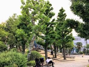 園内の木々