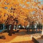 【清澄公園】コーヒー散歩の休憩におすすめ、レトロ建築と隠れた紅葉の名所