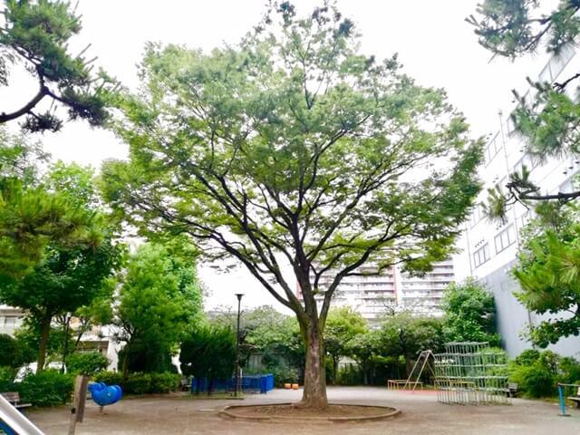 公園内の大きなシンボルツリー