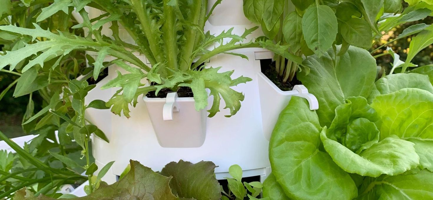 Love Gardening? No need for a green thumb for remarkable results!