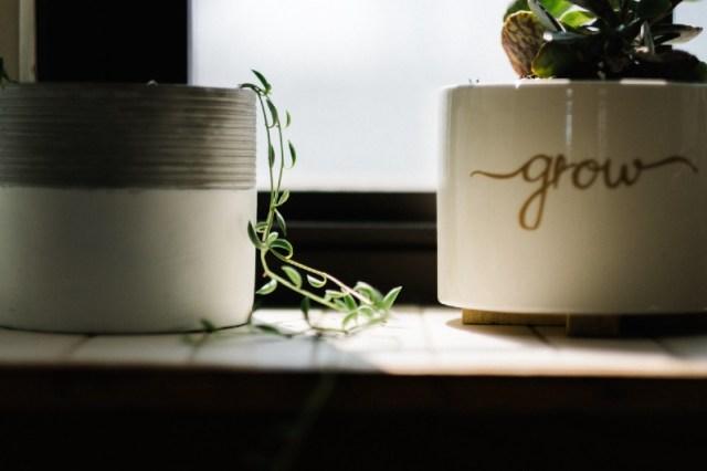 maceta con la palabra grow