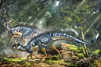 O _Tianyulong_ é o mais primitivo dos dinossauros emplumados já descobertos e pertence a uma ordem sem parentesco com as aves