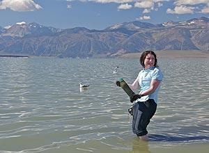 Astrobióloga Felisa Wolfe-Simon recolhe bactérias em lago da Califórnia; espécie substitui o fósforo, fundamental à vida