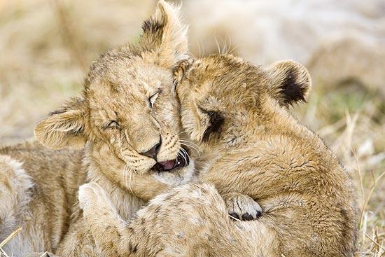 Livro reúne imagens de animais em momentos de prazer, como na brincadeira do filhote; veja galeria de fotos