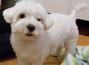 O cachorro Dudu, levado por assaltantes
