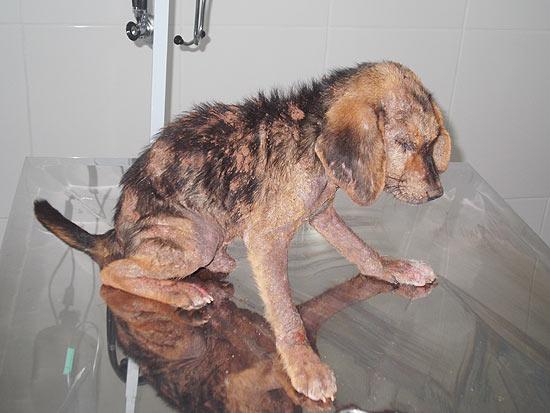 Titã, resgatado após ficar enterrado, é atendido por veterinária em Novo Horizonte (399 km de SP)