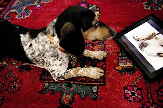 O cachorro Bandit assiste a um programa da Dog TV, que se intitula o primeiro canal pensado para os cães