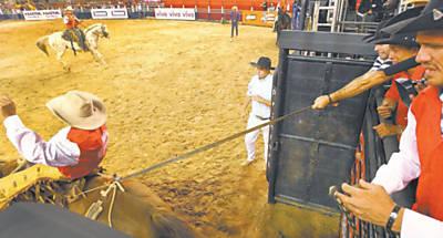 Assistente puxa o sedém na saída do brete para apertar a virilha do animal na série de montarias que antecedeu a Professional Bull Rider, em Cajamar