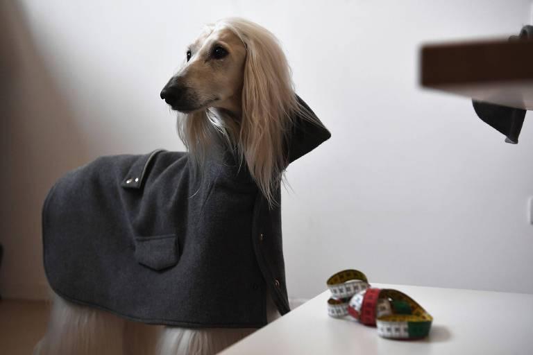 Um cachorro veste uma das peças de Giovanna Temellini