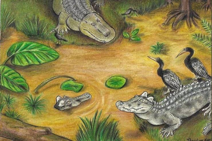 O desenho mostra um Acresuchus na margem e um segundo na água; em escala e tão fiéis à anatomia quanto os fósseis permitem