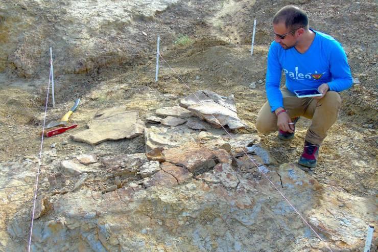 O paleontólogo colombiano, Dr. Edwin Cadena, anotando um dos espécimes masculinos de Stupendemys geographicus durante uma temporada de trabalho de campo em 2016