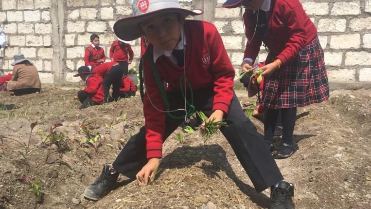 Estudiantes aprenderán el cultivo de la tierra, alimentación saludable y cuidado del ambiente