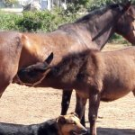 Pferde bei APAC - Social Media