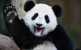 パンダを結婚指輪のメッセージに入れる