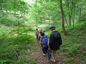 参加者全員で森を見学。 周囲には、カッコウ、ウグイス、コゲラ達が楽しそうに鳴いています