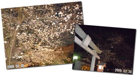 上野公園内にある花園神社の夜桜