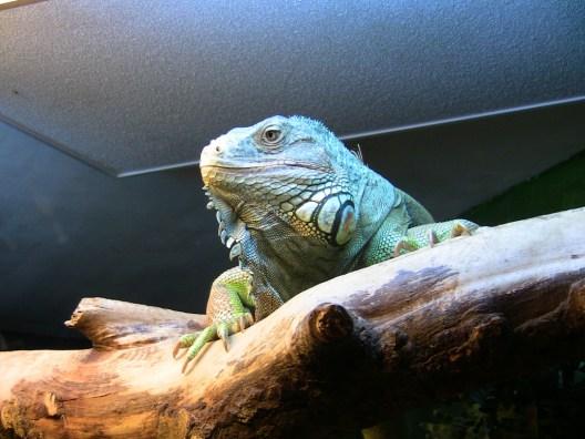 Oslo Reptilpark. Foto: Alice LundAmundsen