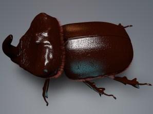 Aurora Lauvanger: 3D Bug