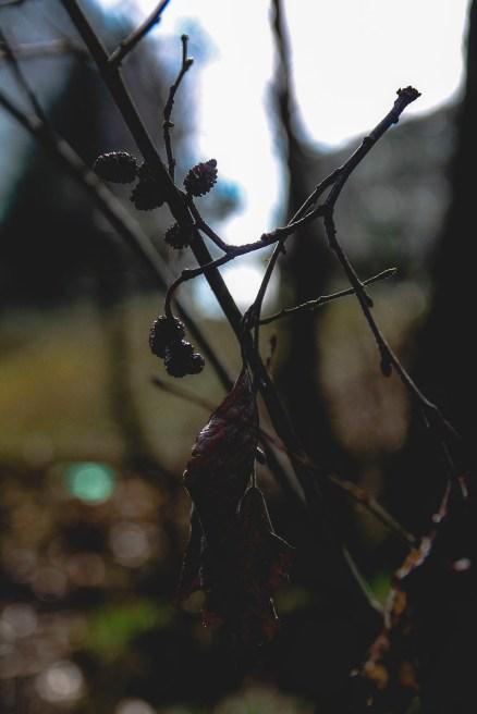 Arisha Haider: Frihet//natur