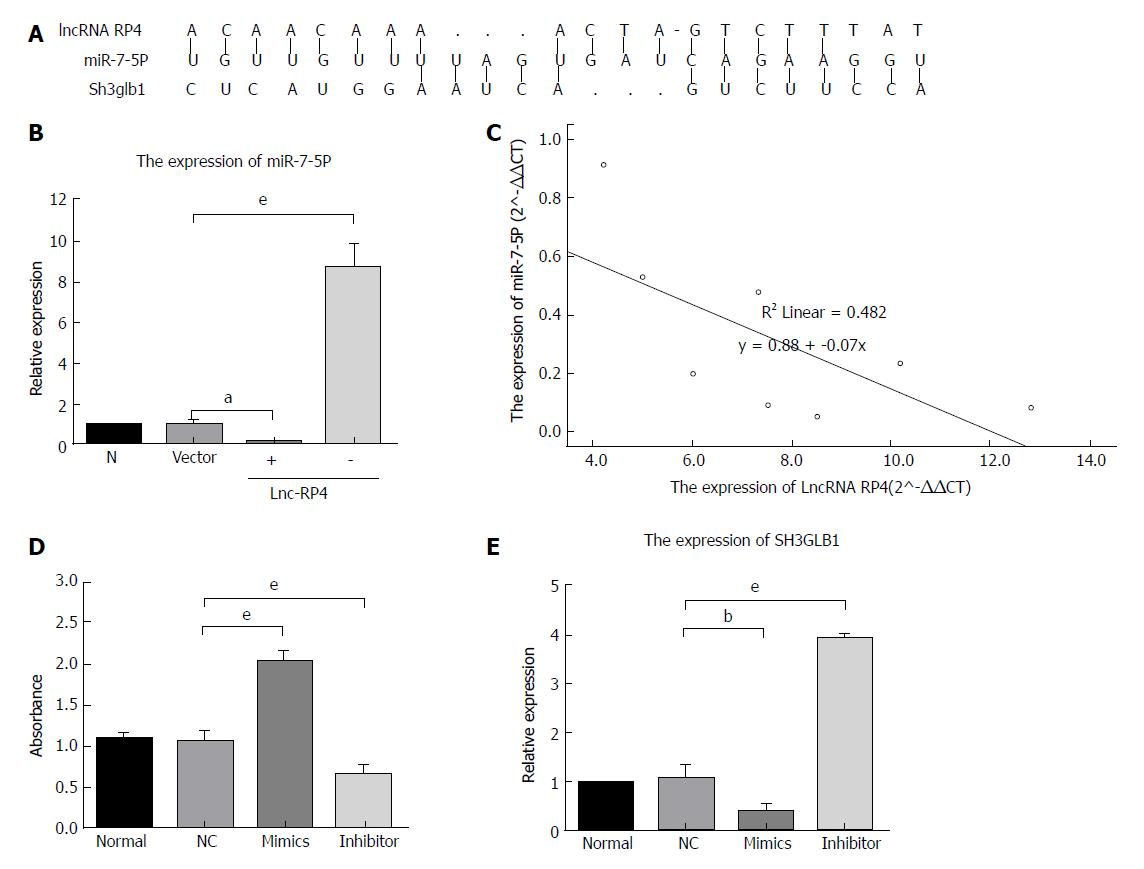 Long Noncoding Rna Rp4 Functions As A Competing Endogenous Rna Through Mir 7 5p Sponge Activity