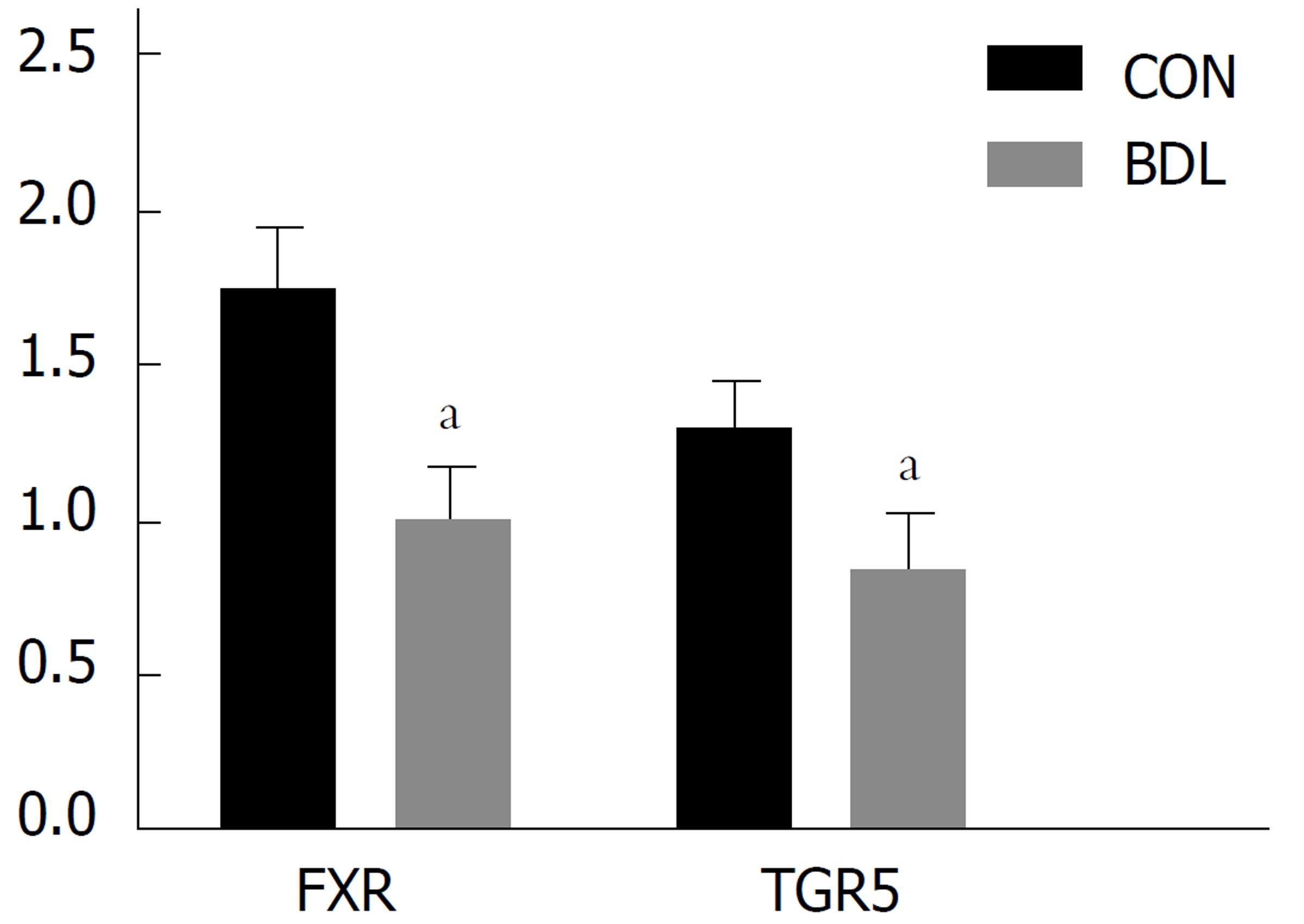 FXR和TGR5在梗阻性黃疸大鼠腎臟中的表達變化