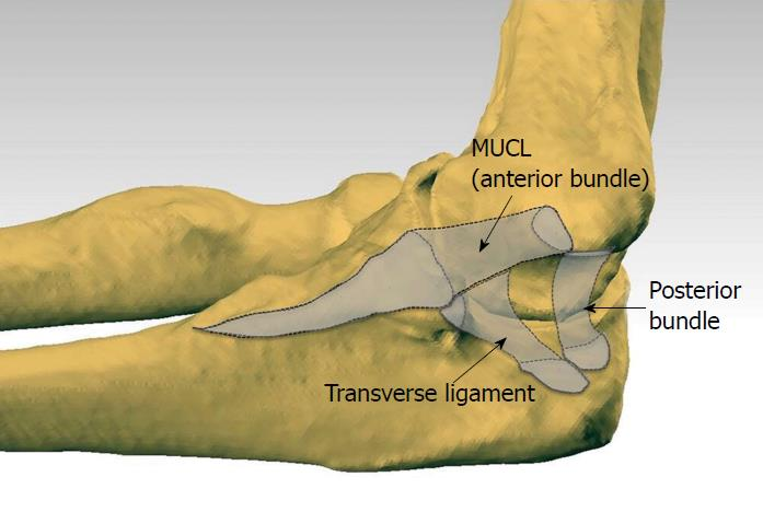 Understanding the medial ulnar collateral ligament of the ...