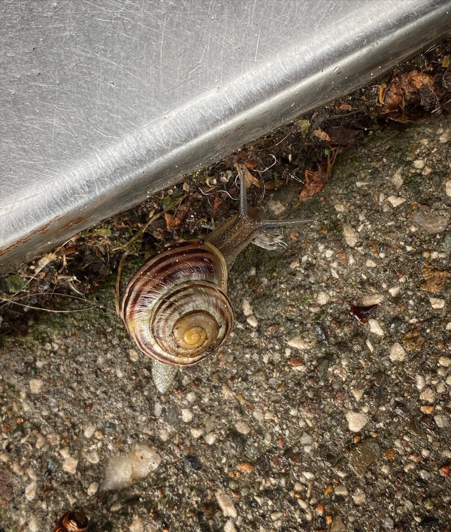 Steel Snail