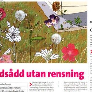 AMV, magazine