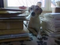 Klein Luna beim Versenden unseres vorletzten Buches :-)