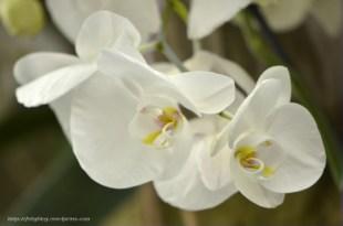 Orchidée (5) - Grandes Serres du Jardin des Plantes (75) - février 2013