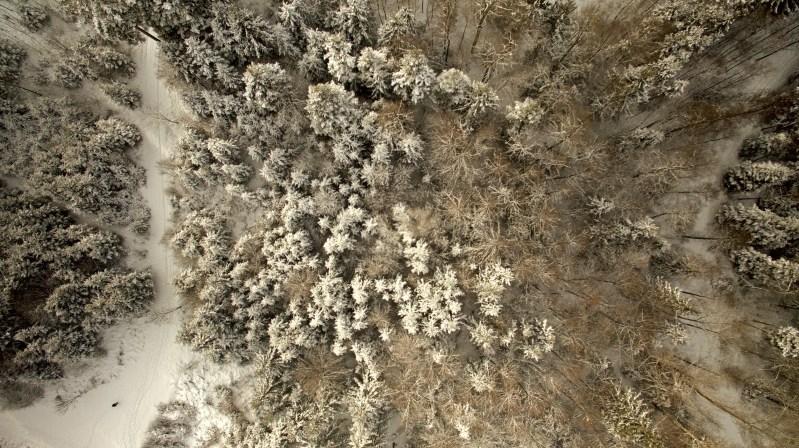 Aerial Winterwald