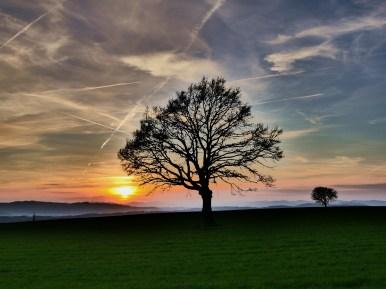 Baum im Sonnenuntergang