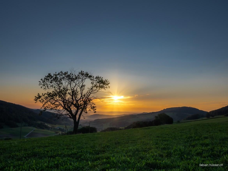 Baum im Sonnenaufgang
