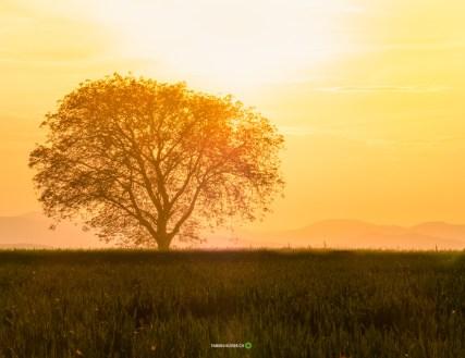 © Fabian Hüsser | Camera: Panasonic Lumix E-M5MarkII | Lens: OLYMPUS DIGITAL CAMERA | Settings f/11 | 1/320sec | ISO-200 |100mm | fabian.hüsser.ch