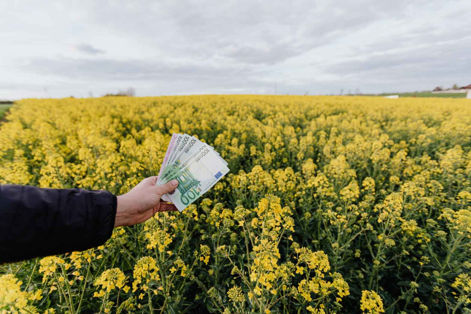 crop man with paper banknotes on blooming meadow