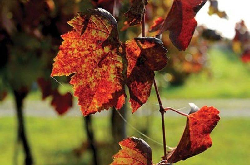 Outono na italianísssima Emília-Romagna