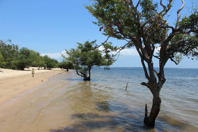 Praia do Rio Arapiuns - Web