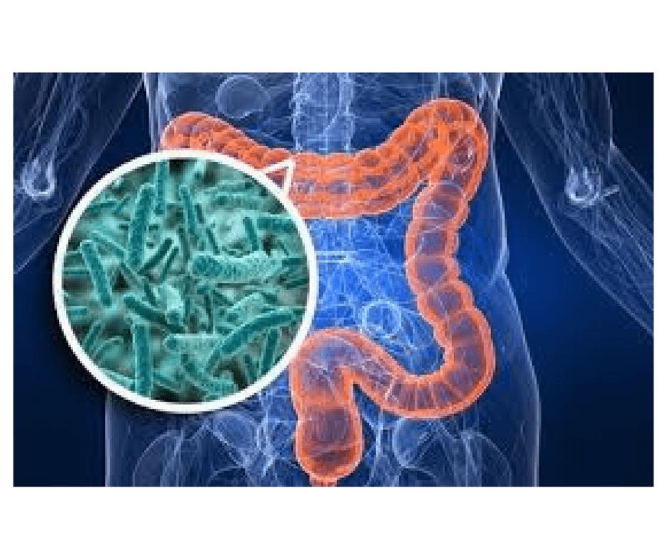 disbiose intestinal