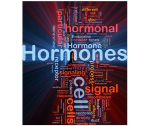 hormônios bioidênticos reposição hormonal