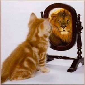 Cat sees lion in the mirror