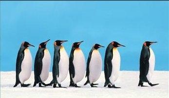 Leading penguins