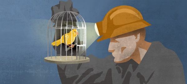 Live Canary in a coal mine