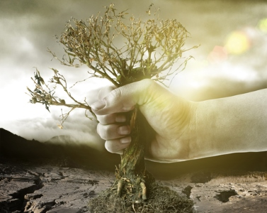 Hand holding dry tree in front of a catastrophic background