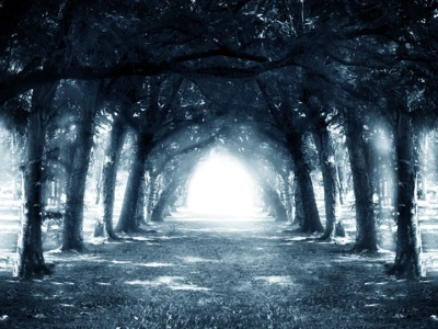 Path in dark mysterious forest.