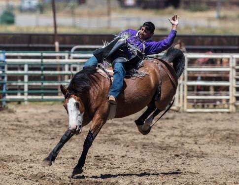 Bronco Busting a Horse - Dreamstime-93190806
