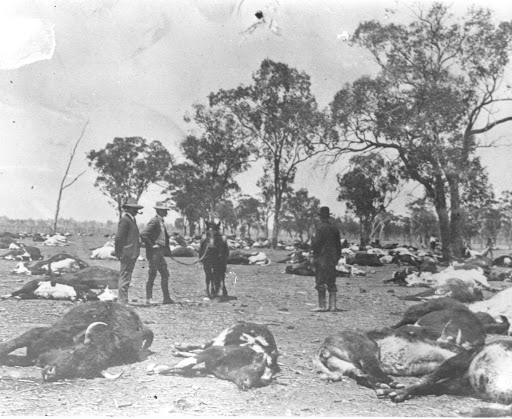 Photo of Australia's Federation Drought
