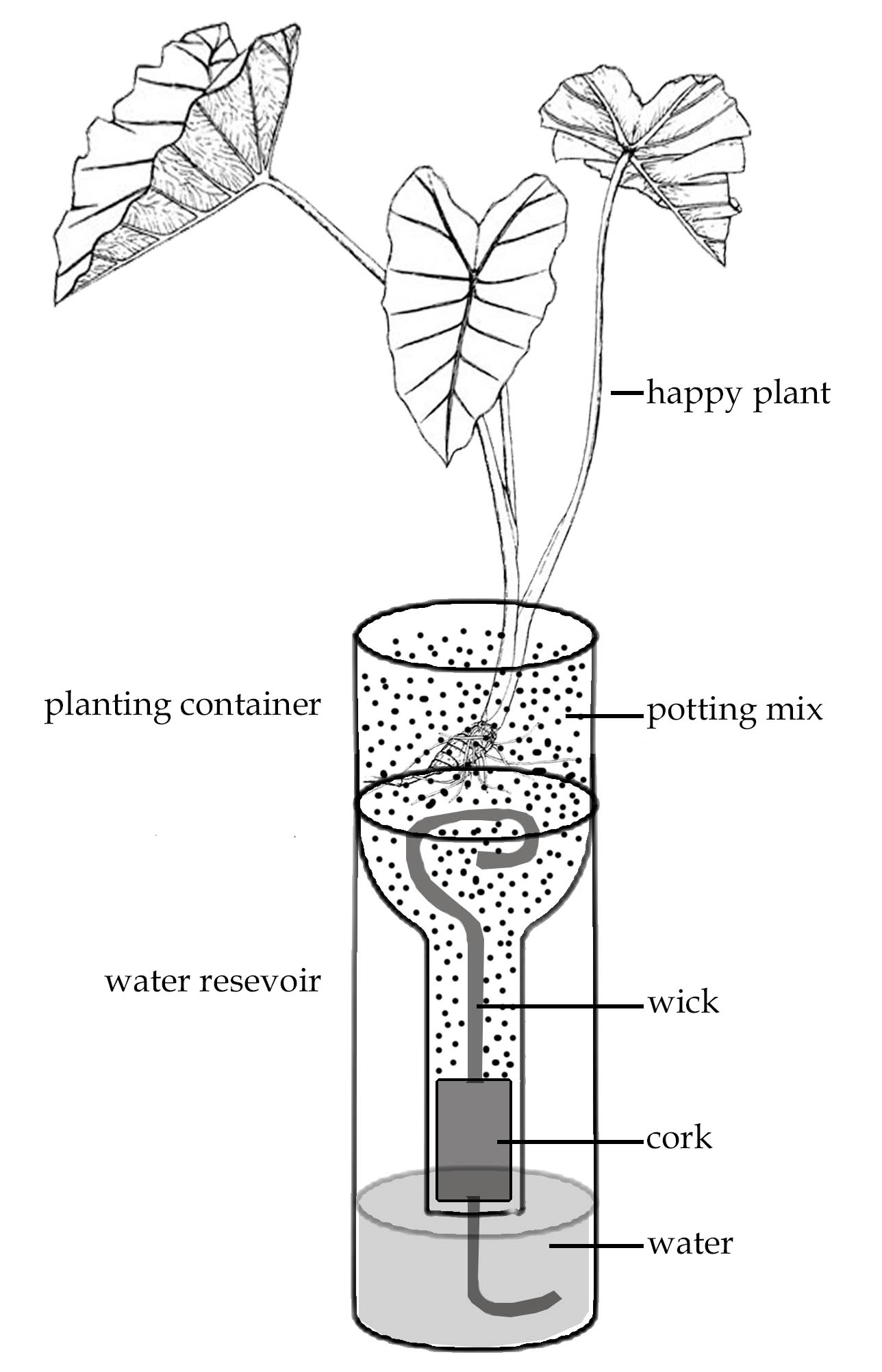 Use And Care Of Self Watering Planters