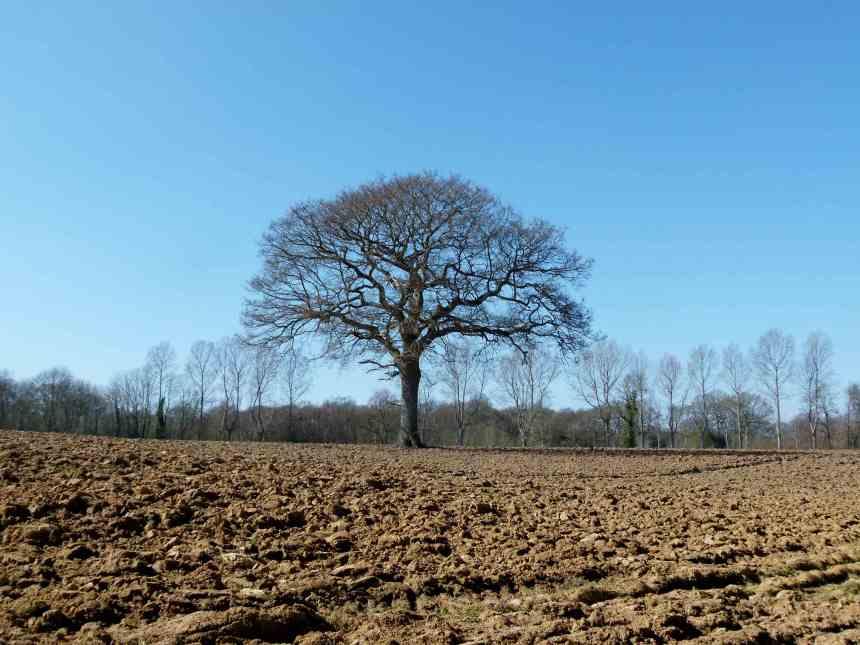 Blue sky, a tree and soil